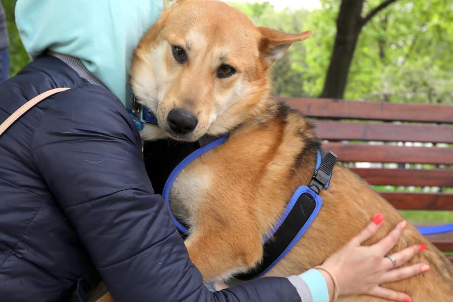 Какие породы собак выбирают жители столицы