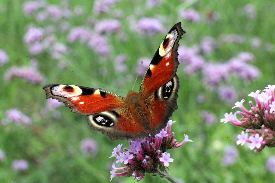 Бабочки, шмели и божьи коровки проснулись в столичных парках и лесах — Мосприрода