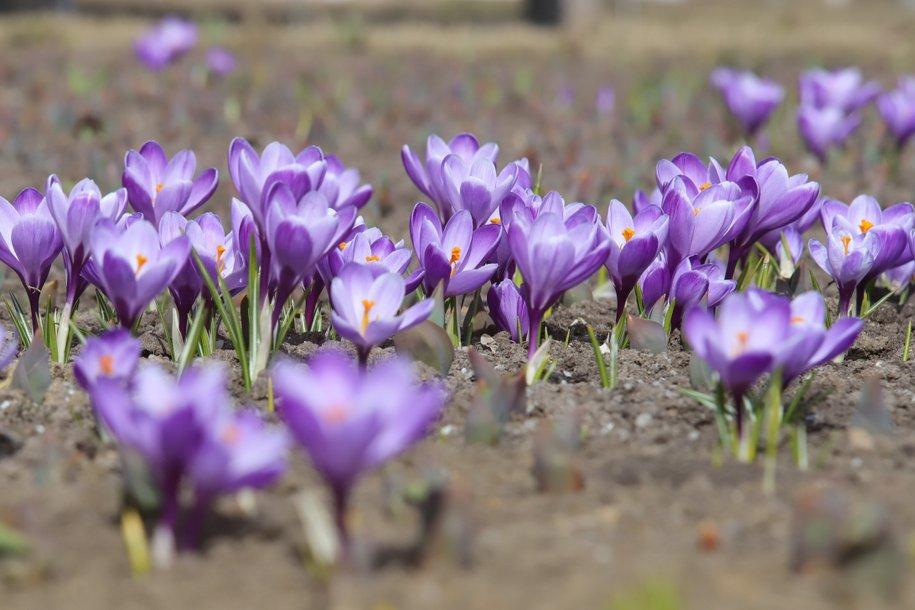 Нынешний апрель стал самым сухим за последние 100 лет