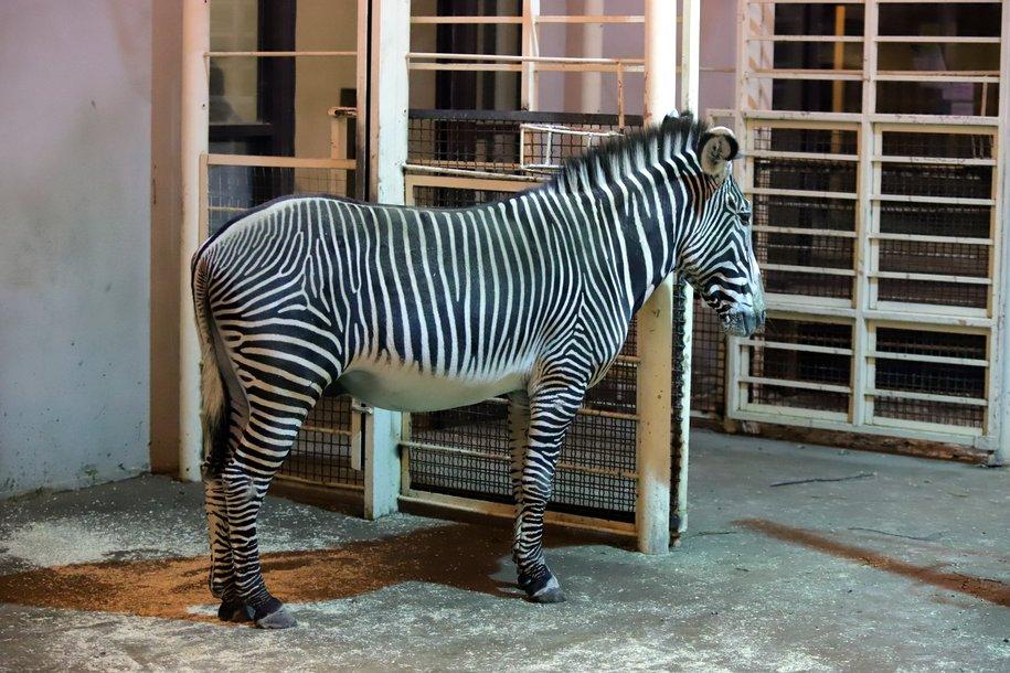 Укрытия в вольерах зоопарка помогают сохранить психологическое здоровье  животных