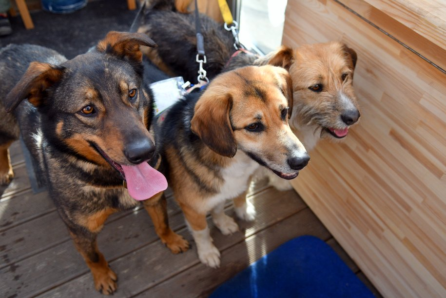 Сервис по утилизации умерших домашних животных запустили в Москве