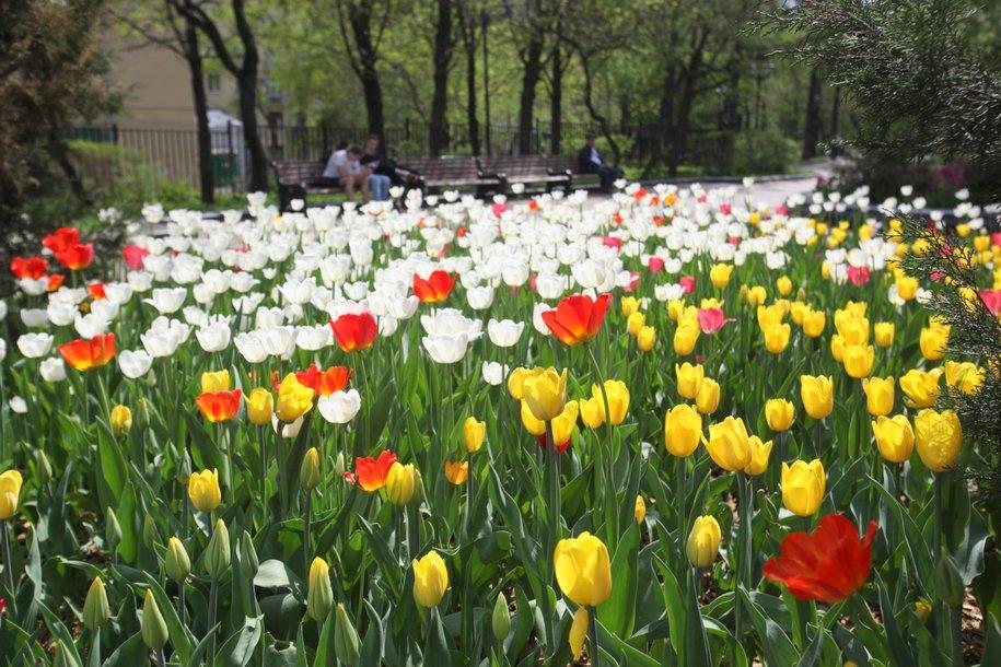 К Дню Победы столицу украсят более 12 млн тюльпанов