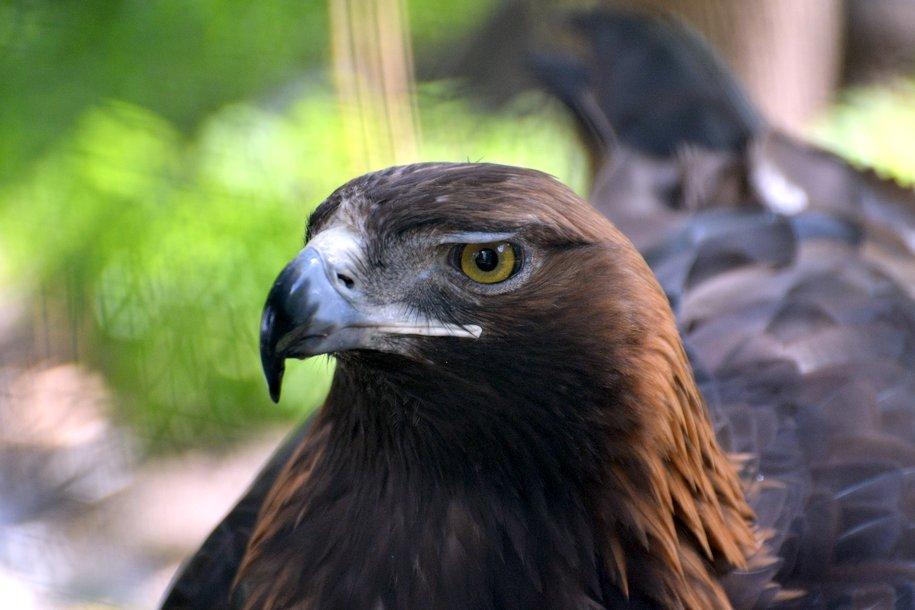 В столице пройдут соревнования по спортивной орнитологии