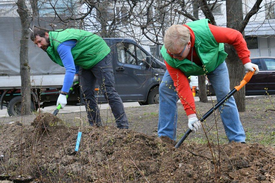 «Активные граждане» смогут решить, нужно ли дополнительно озеленять жилые дворы