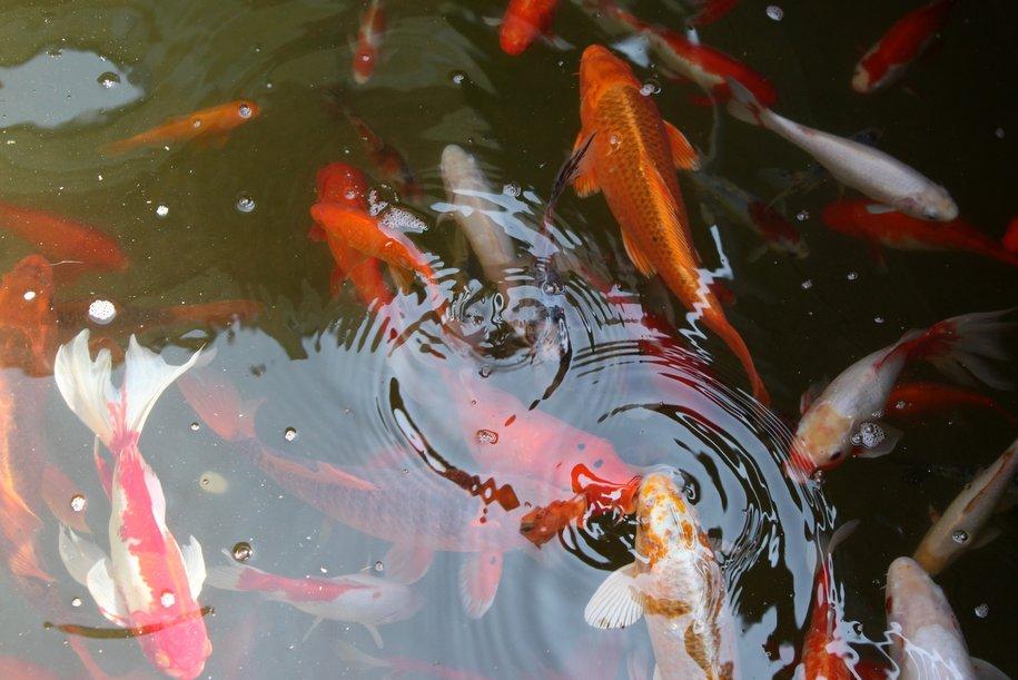 Свыше двух миллионов человек стали гостями фестиваля «Рыбная неделя»