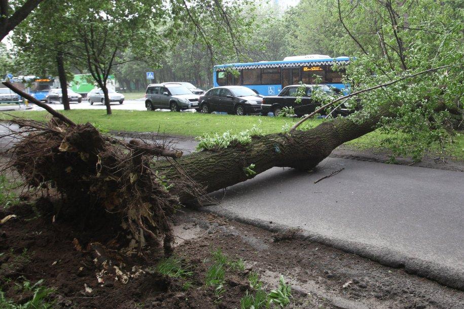 ЦОДД рекомендовал автомобилистам не парковаться вблизи деревьев из-за грозы