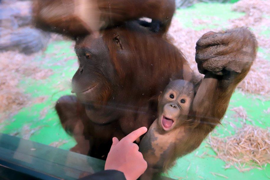 Павильон «Дом обезьян» в Московском зоопарке закроют 3 июля для проведения техработ