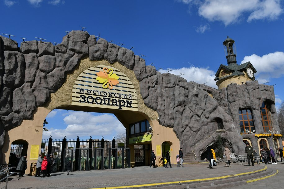 В Московский зоопарк приедет бактриан из Индонезии