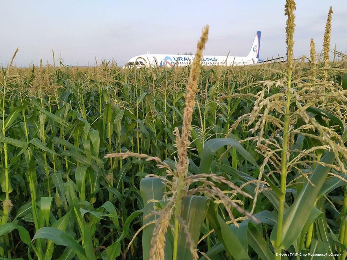 Самолёт «Уральских авиалиний» экстренно приземлился в кукурузном поле Подмосковья