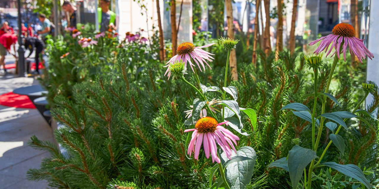 «Цветочный джем» приглашает на бесплатные экскурсии по садам