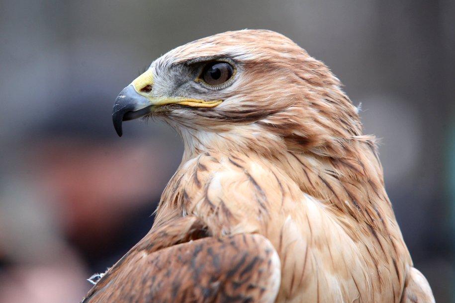 В Москве может появиться орнитологический центр по борьбе с птицами в аэропортах