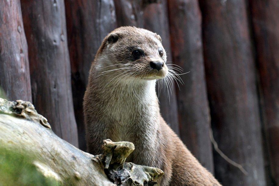 В парке «Северное Тушино» 18 августа состоится праздник «В мире животных»