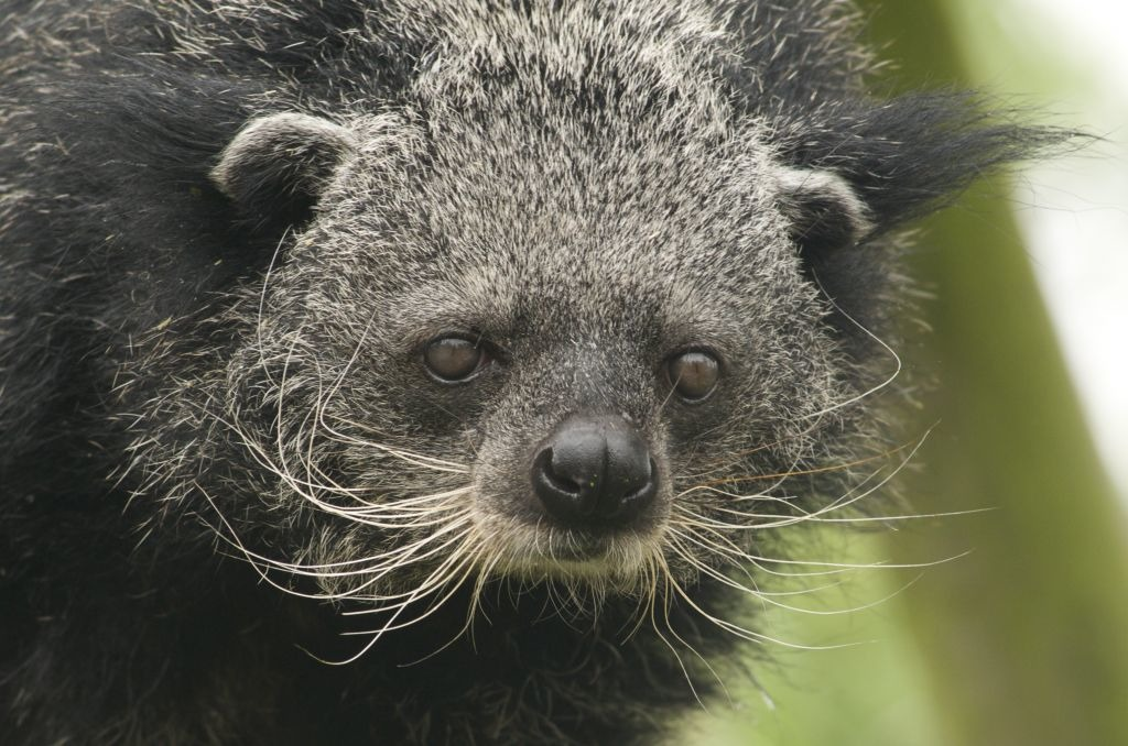 Необычный хищник прибыл в Московский зоопарк из Чехии