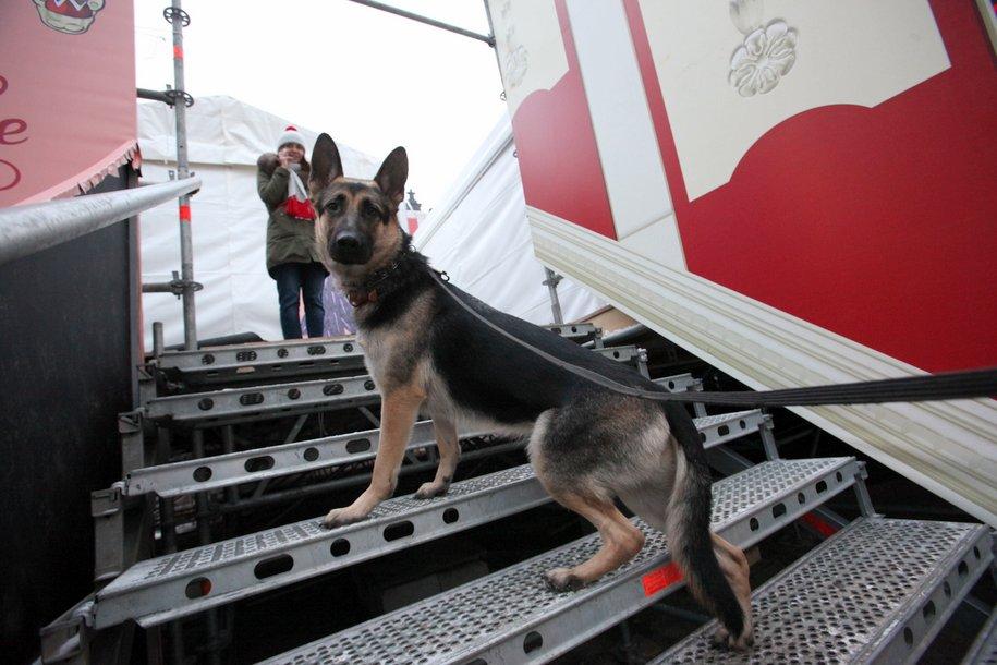 В поездах МЦД домашние животные будут ездить бесплатно