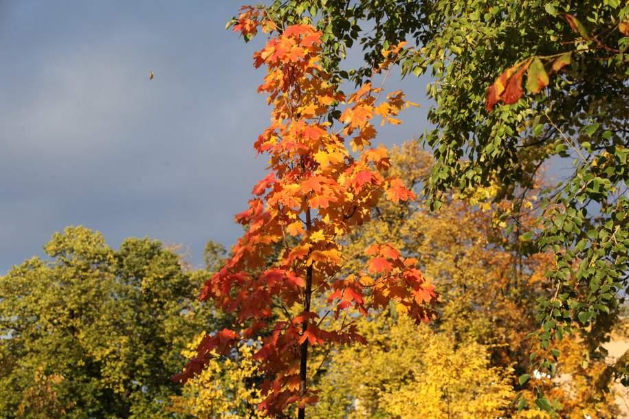 Более 6,4 тыс. деревьев планируют высадить в Москве до конца октября