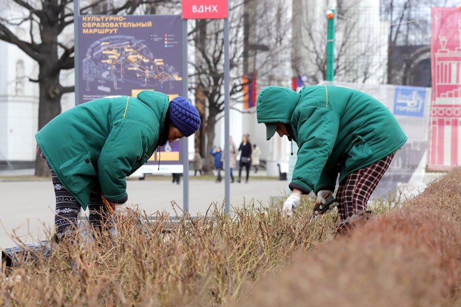 Почти 1,8 тыс. кустарников и деревьев высадят в районе станции метро «Лефортово»
