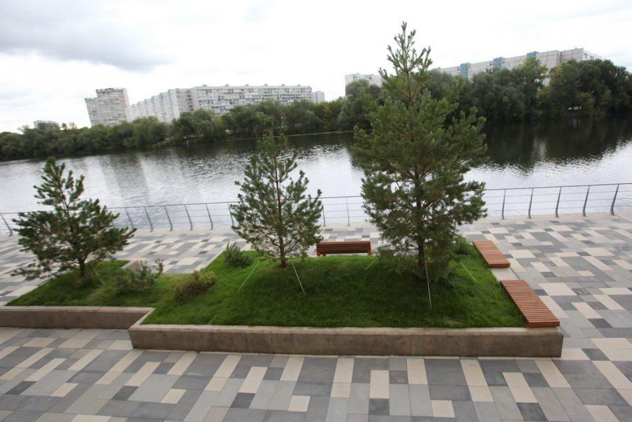 На набережной Марка Шагала высадят более тысячи деревьев и кустарников