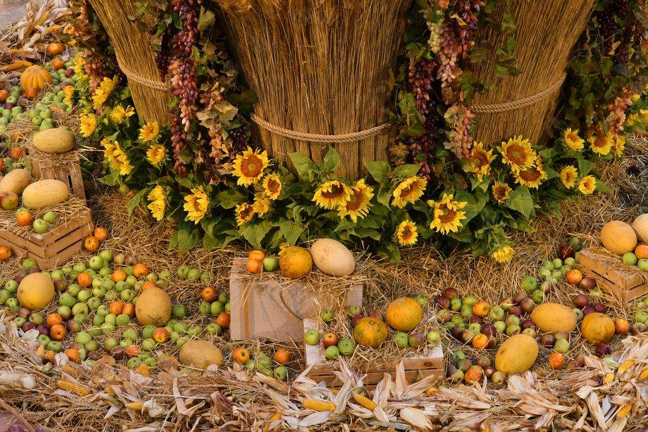 Выставка раритетных тракторов откроется на фестивале «Золотая осень»