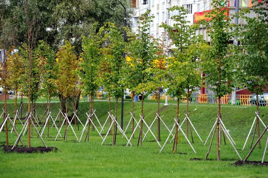 В Алтуфьевском районе высадят более 1300 кустарников