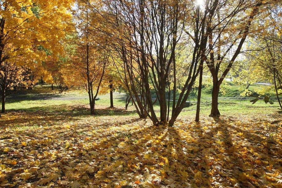 Опавшую листву будут убирать для поддержания санитарного состояния Москвы