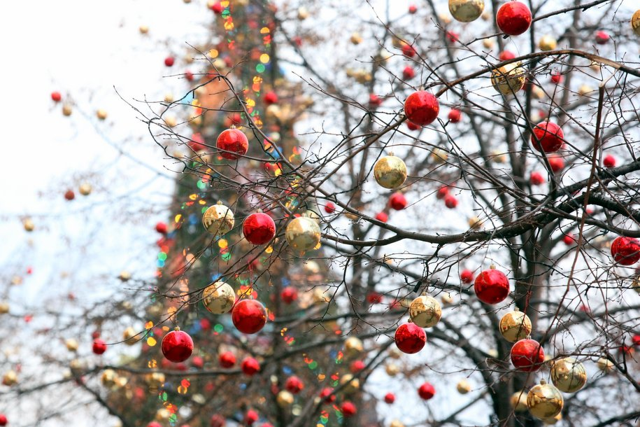 На Соборную площадь Кремля привезли новогоднюю ель из Можайска
