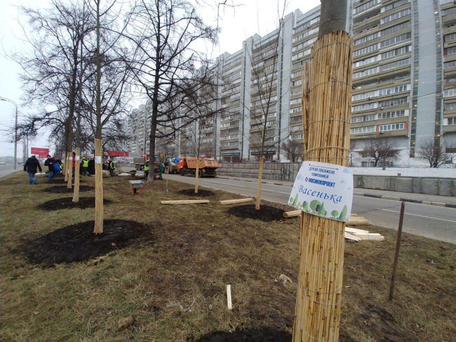 Началась высадка деревьев-крупномеров при строительстве Коммунарской линии метро