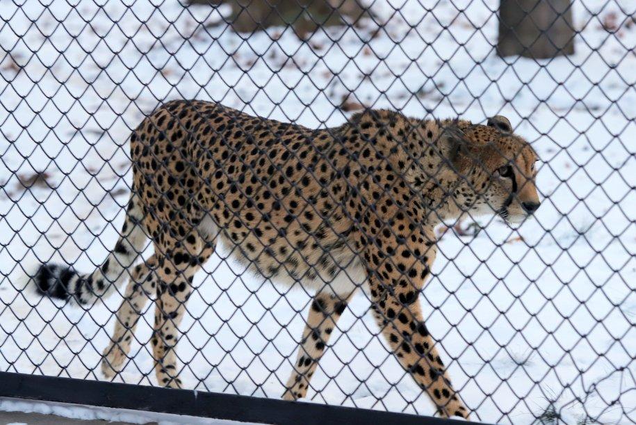 В Московском зоопарке впервые пройдет акция «В зоопарке ждут подарки»