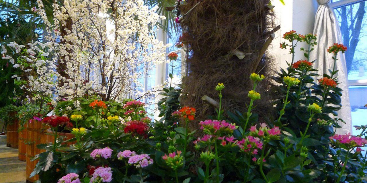 Цветочная выставка открылась в музее-заповеднике «Царицыно»