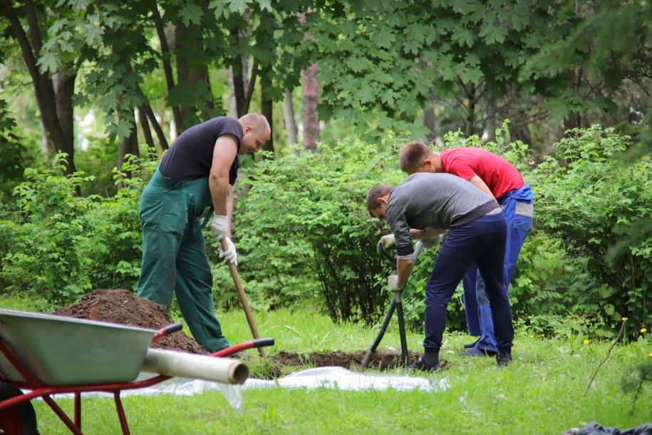 В Метрогородке высадят более 6 тысяч деревьев и кустарников по программе реновации