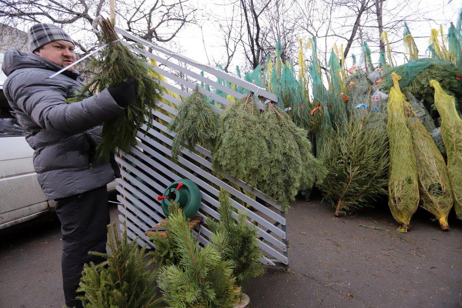 Москвичи сдали на переработку более 22 тысяч ёлок