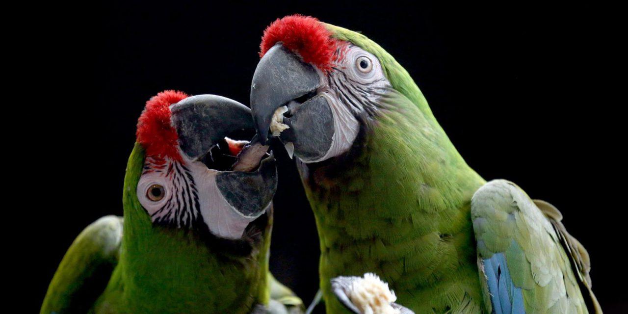 Московский зоопарк предлагает скидку в День влюбленных