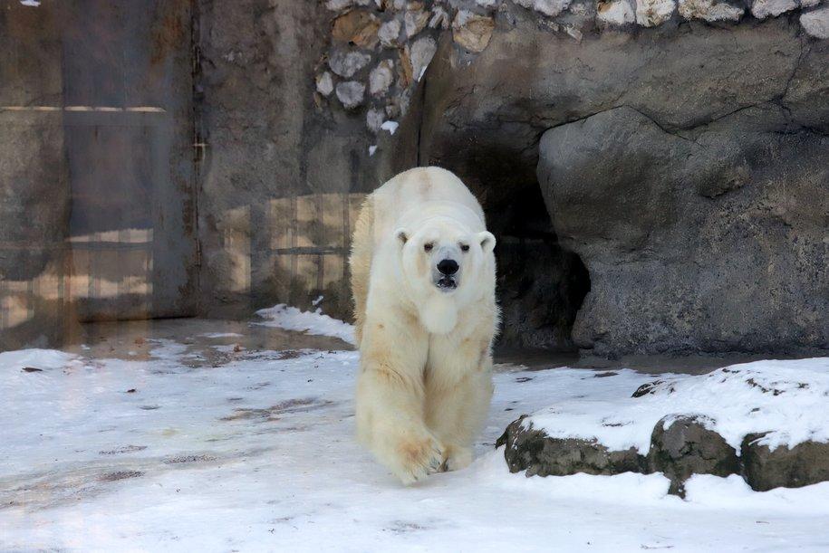 Международный день белого медведя отметят в Московском зоопарке 27 февраля
