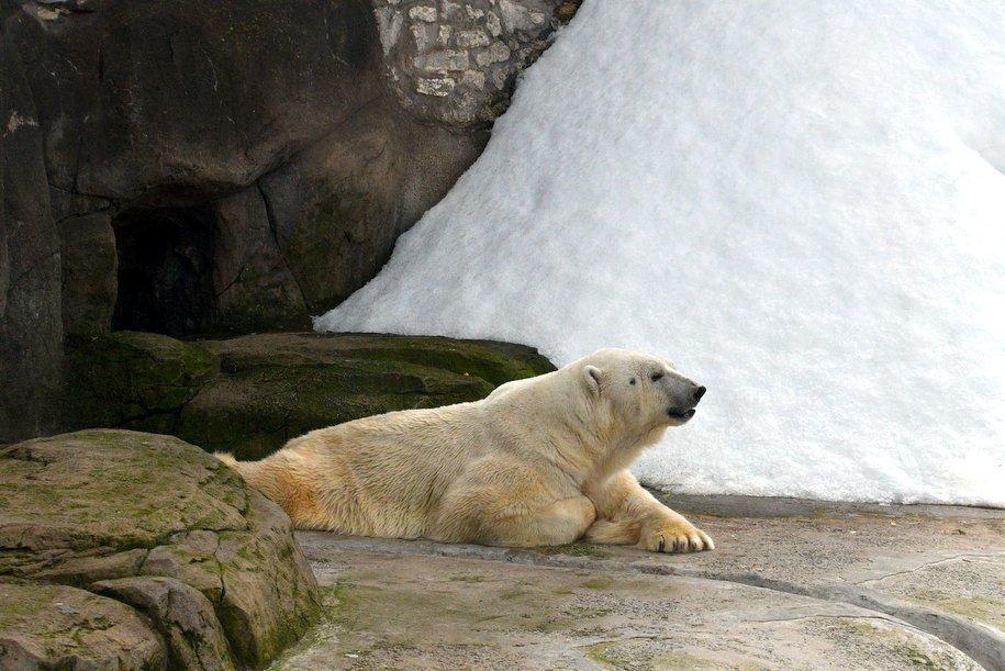 Более 350 человек пришли в белом в Московский зоопарк в Международный день полярного медведя