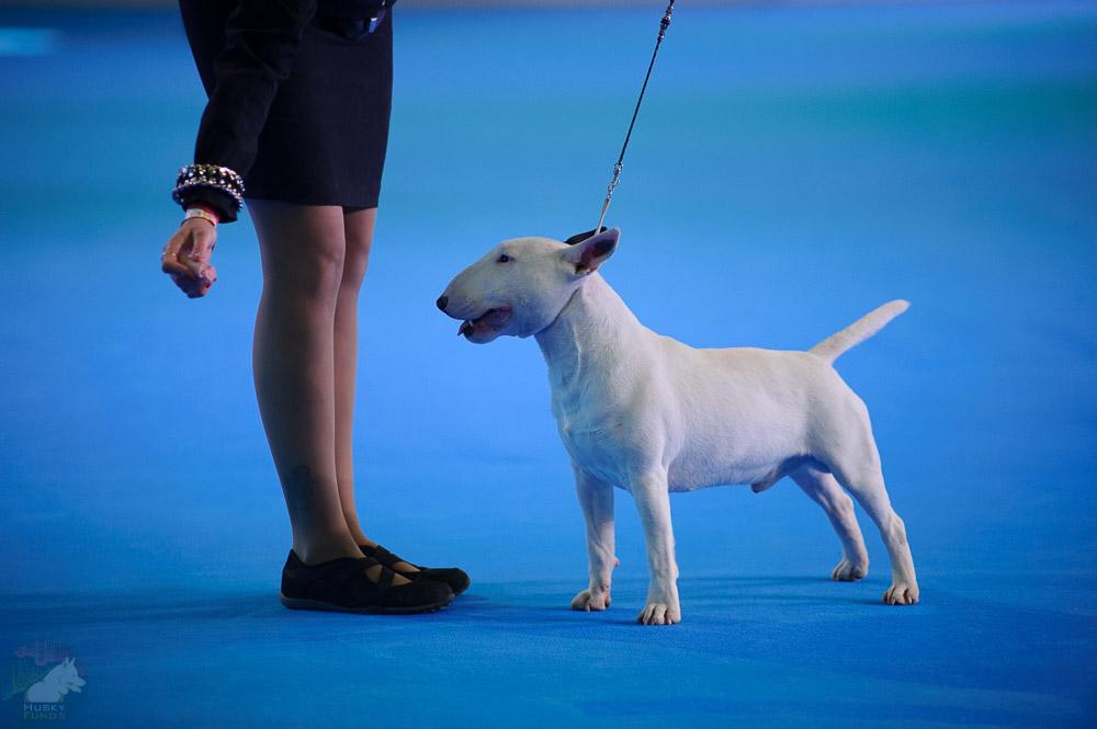 Ветеринарные клиники Москвы примут участие в акции по чипированию животных