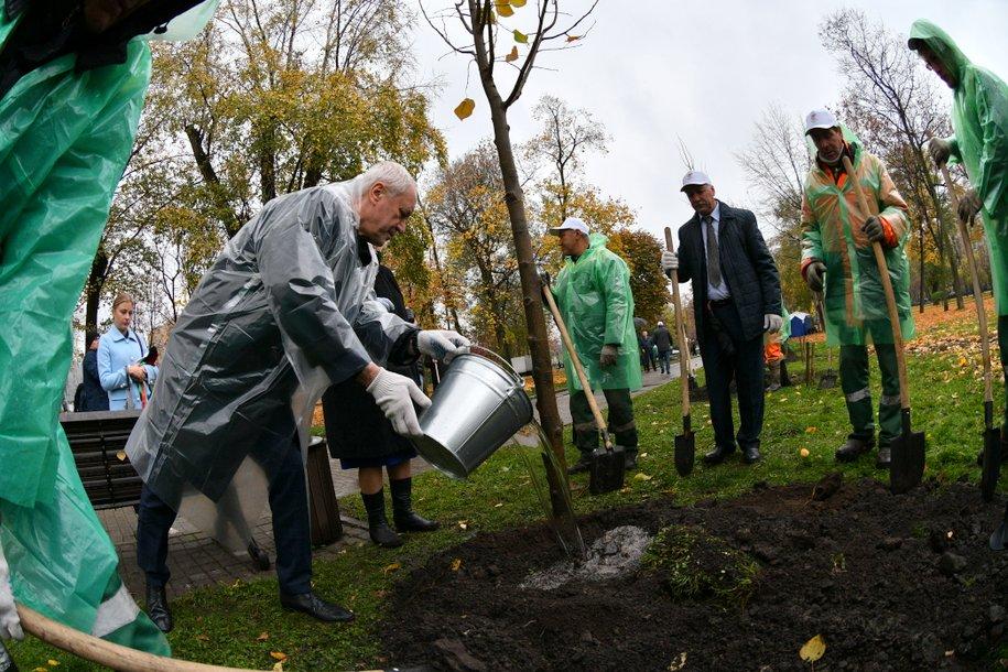 Москвичи решат, какие дворы озеленят в 2021 году
