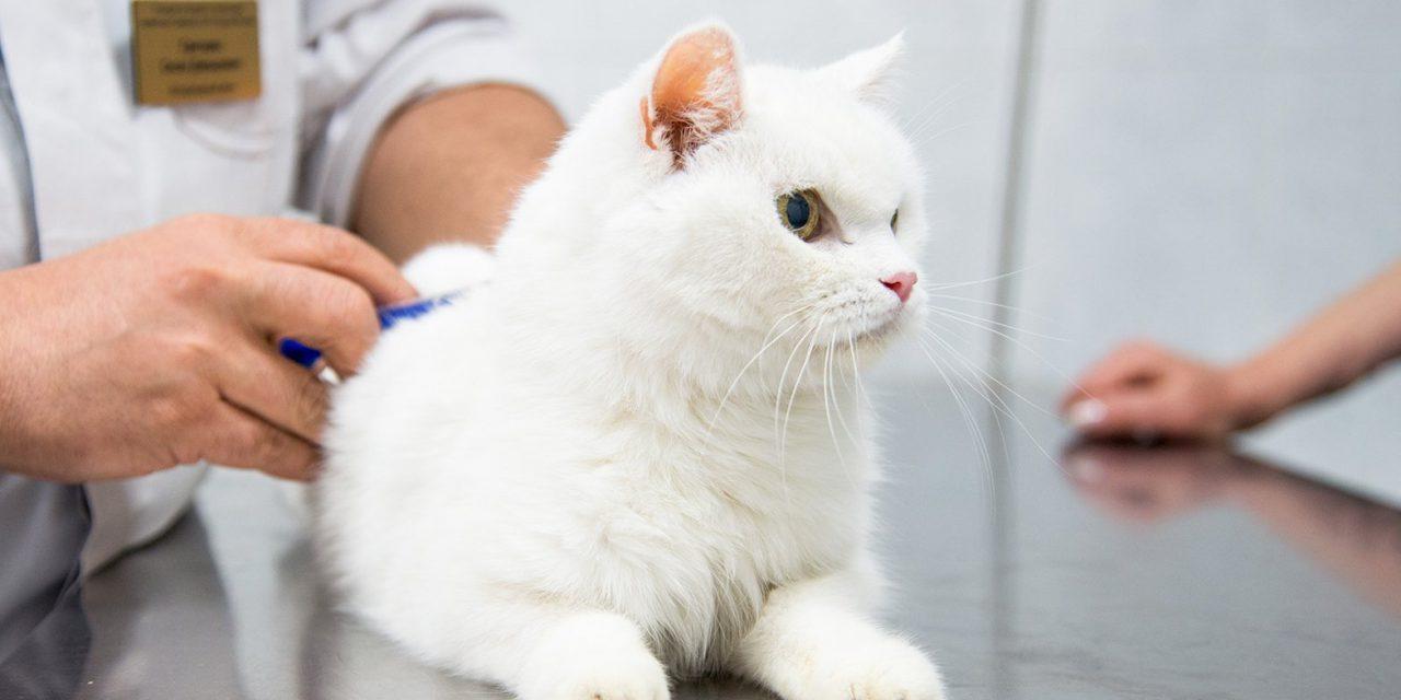 Свыше 130 ветеринаров работают в Москве во время самоизоляции