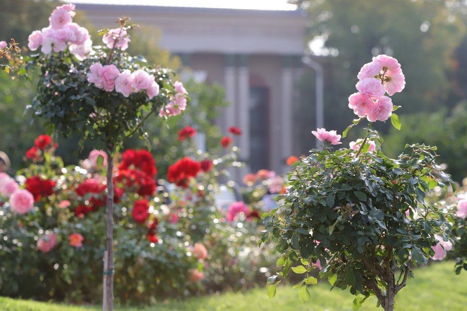На природных территориях Москвы созданы уникальные «сады здоровья»