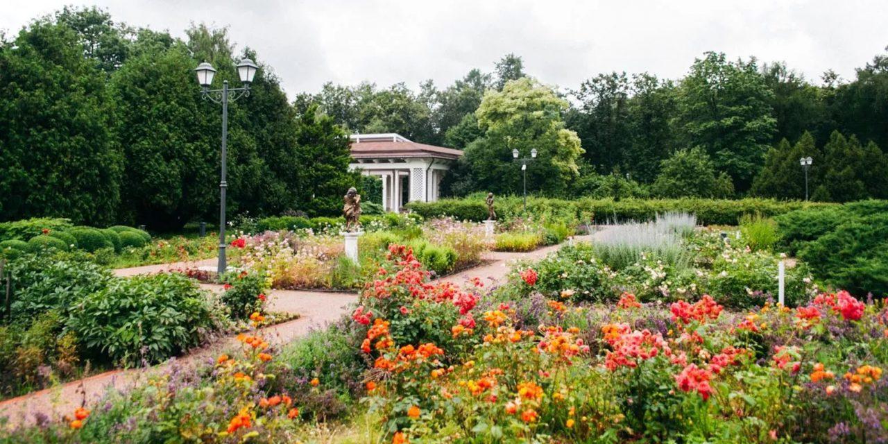 Большой розарий в парке «Сокольники» откроется 1 августа