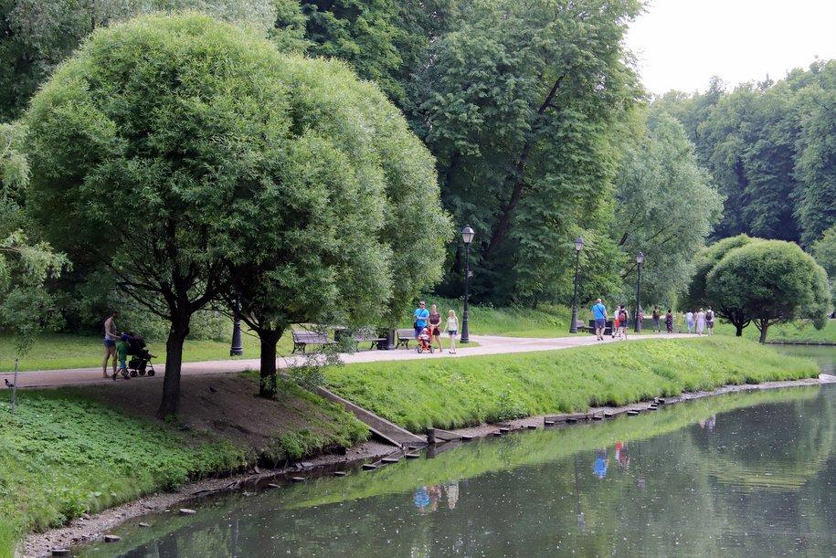 В столичных парках заметили диких кабанов