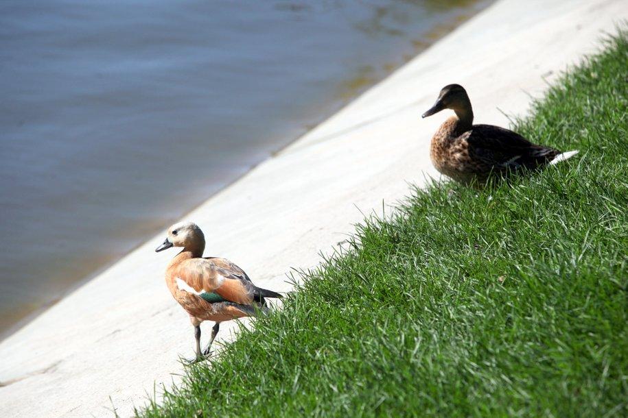Москвичей призвали не подкармливать птиц до выпадения снега