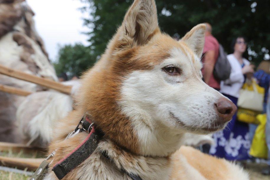 В Госдуме одобрили предложение штрафовать владельцев громко лающих собак