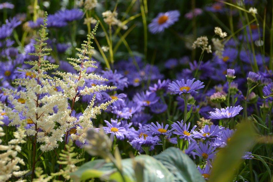 В музее-заповеднике «Царицыно» пройдёт фестиваль цветов