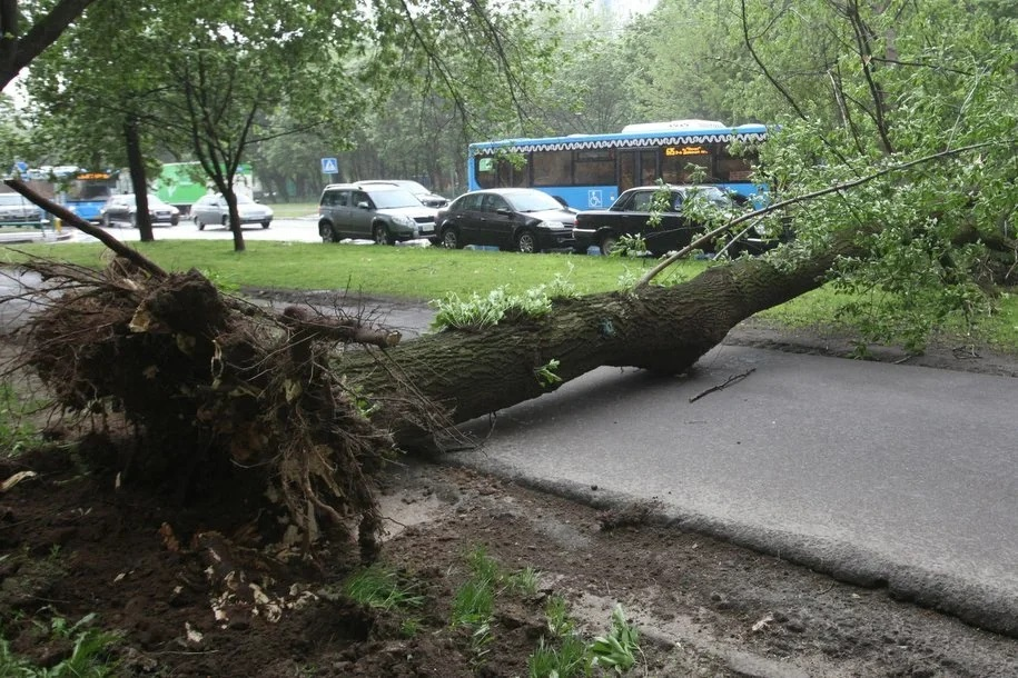 Около 10 деревьев повалило ветром в Москве