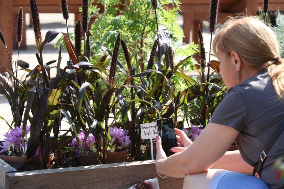 В «Аптекарском огороде» стартуют детские ботанические экскурсии-квесты