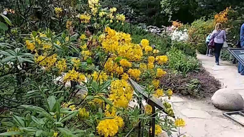Рододендрон и топинамбур расцвели в «Аптекарском огороде»