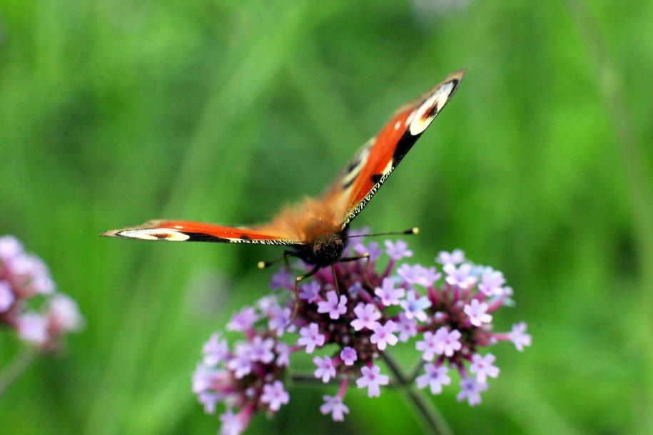 В «Аптекарском огороде» представили самых больших бабочек и пауков