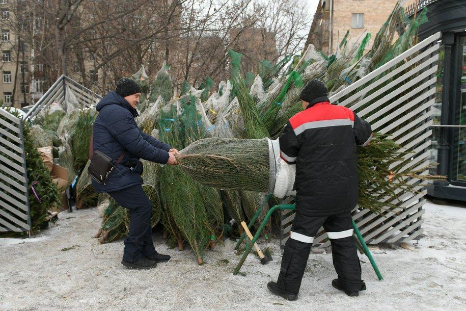 В Москве открылись ёлочные базары