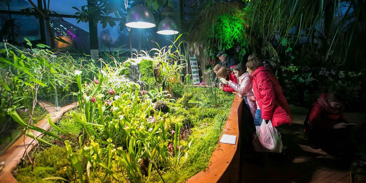 Редкие тропические орхидеи представят с 30 декабря в «Аптекарском огороде»