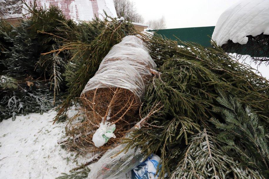 Со 2 января в Москве откроется более 500 пунктов утилизации ёлок