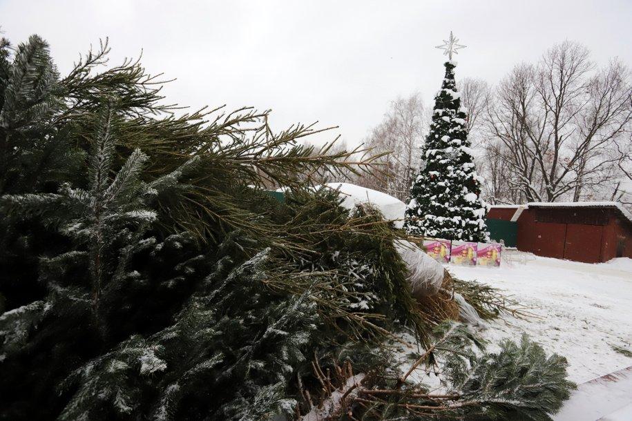Москвичи выберут адреса пунктов для сдачи новогодних елок на утилизацию